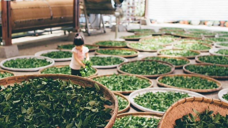 Informationen über unsere Tee-Sorten
